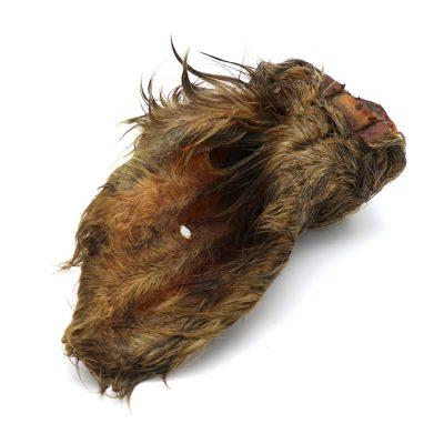 Oreille de bœuf (séchée)