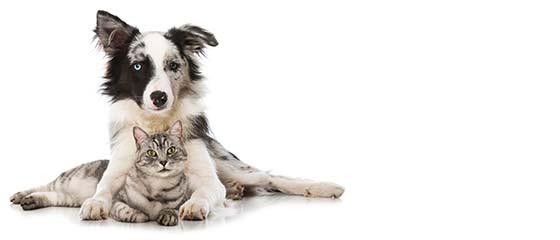 BARF voor honden en katten