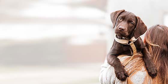 BARF voor honden
